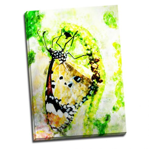 Tablou Verde Fluture Catalog