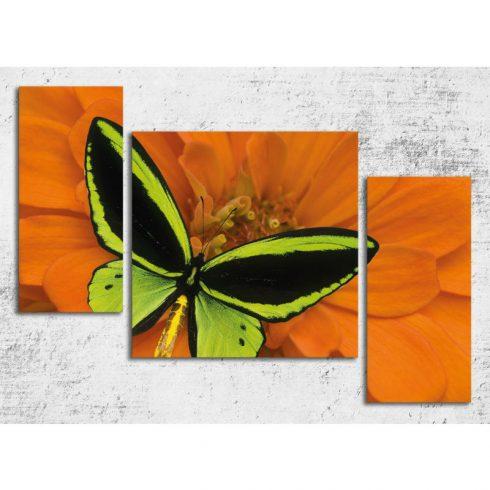Tablou canvas cu fluture Catalog