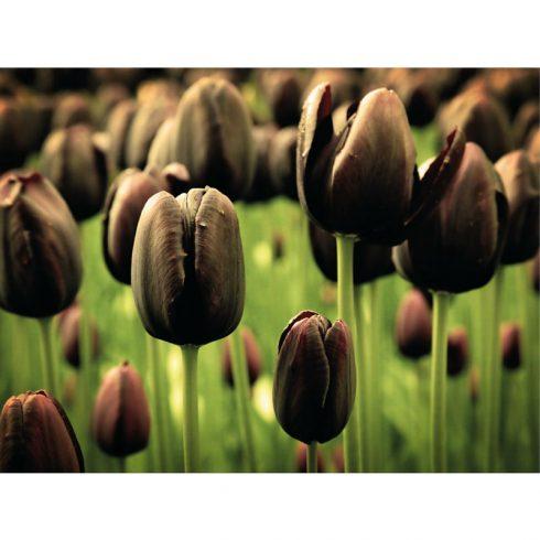 Tablou lalele negre Catalog