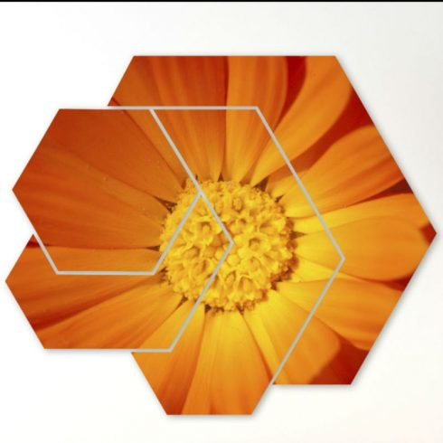 Tablouri 4 piese detaliu floral - Catalog