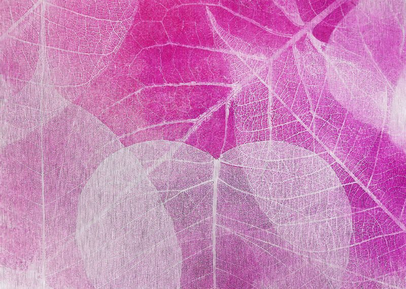 Tablou roz cu frunze albe - Aspect zona intunecata