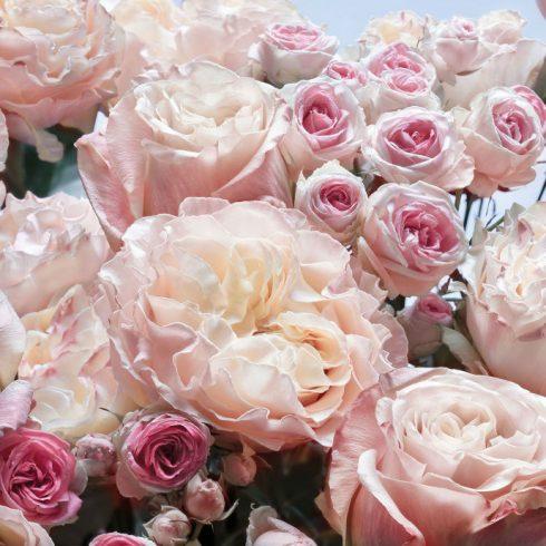 Fototapet trandafiri roz eleganti