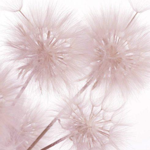 Fototapet papadie roz delicat - Catalog