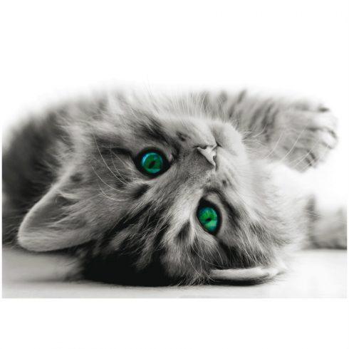 Fototapet cu pisicuta gri - Catalog