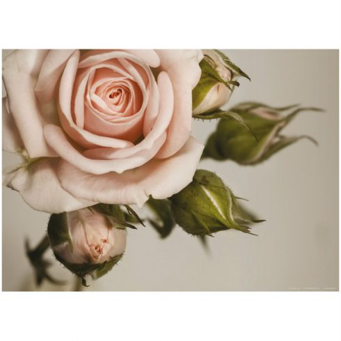 Fototapet trandafir roz vintage - Catalog