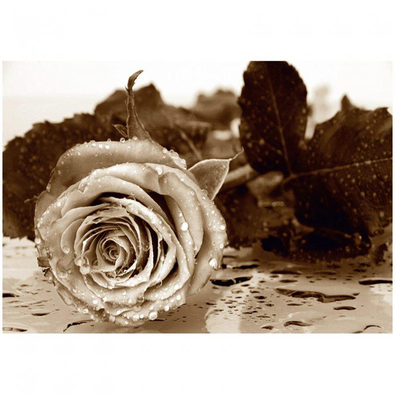 Fototapet sepia trandafir AG Design