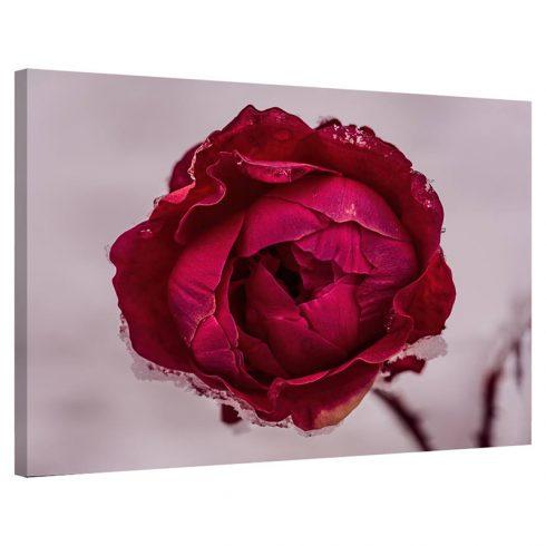 Tablou trandafir Rosu de Gheata