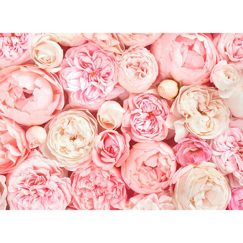 Fototapet trandafiri roz Puritate