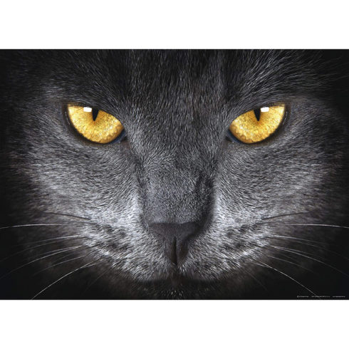 Fototapet ochi de pisica neagra